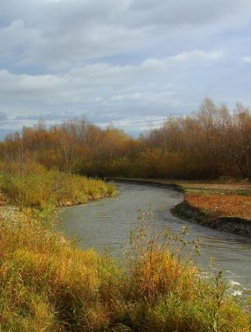 raul Barsa, Barsa River, Castor fiber, castor pe Olt, castor Brasov, Tara Barsei
